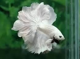 نتيجة بحث الصور عن صور اسماك جميلة