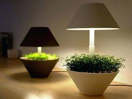 office with no windows. Brilliant Best Plants For Office With No Windows Decorating