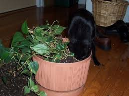 Indoor Plants Cats Avoid: Houseplants Cats Won't Chew On Or Potty In