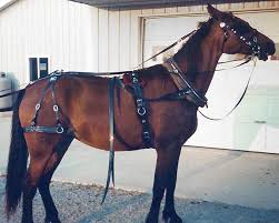 horse harness, horse collars, horse hames, & harness parts horse harnessing at Horse Harness