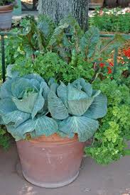 Vegetable Container Garden  For More Organic Gardening Ideas Container Garden Ideas Vegetables