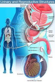 chronic epididymitis pain relief