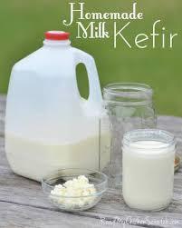 kefir milk. milk kefir grains ~ fermented yoghurt l