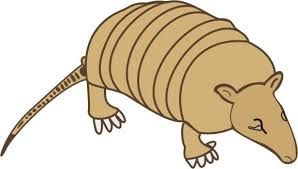 Small Picture Armadillo Coloring Pages for Kids to Color and Print