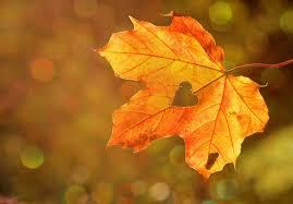 Benvenuto, autunno - Seven Blog