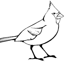Small Picture Picture of Cardinal Bird Coloring Page Picture of Cardinal Bird
