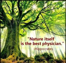 Best Nature Quotes Awesome 48 Natural Medicine Quotes Know Thy Health