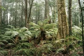 Реферат Австралийский союз Животный и растительный мир   где выпадает много осадков покрыты густыми тропическими и субтропическими вечнозелеными лесами Больше всего в этих лесах как и повсюду в Австралии