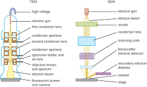 Types Of Microscopes Chart Instruments Of Microscopy Microbiology