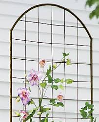 Trellis Guide How To Choose The Best Supports For Climbing PlantsClimbing Plant Support