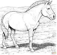 Przewalskis Wild Horse Coloring Page Horses Pages 9