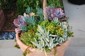 953 Best Container Gardening Images On Pinterest  Pots Garden Succulent Container Garden Plans