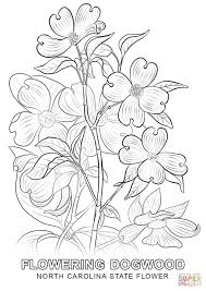 Small Picture North Carolina State Flower coloring page Free Printable
