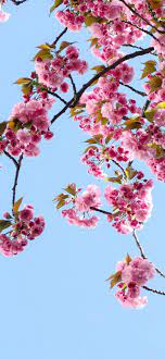 Spring Wallpapers for iPhone - HD ...