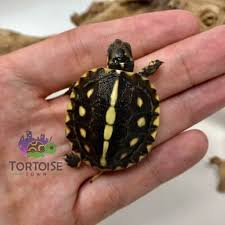 box turtle substrate what is best