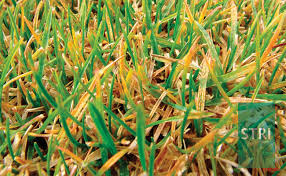 Turf Disease Turf Disease Control Services Als Contracts