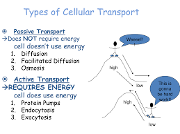 3 Types Of Passive Transport Facilitated Diffusion And Active Transport Ppt