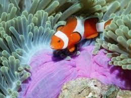 Животный мир мирового океана География В Тихом и Индийском океане обитают наутилусы из рода головоногих моллюсков дюгони обитающих в тропических областях парусники из семейства окунеобразных и