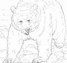 Disegni Da Colorare Masha E Orso Pagine Da Colorare Di Orso Bruno