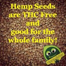 short essay on save earth save life for children and students  grow more hemp for oxygen ecosia