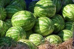 A Companion Plant For Watermelon Companion Gardening