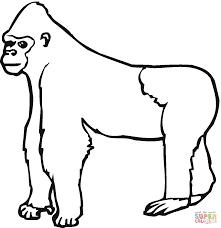 Gorilla Aap Kleurplaat Gratis Kleurplaten Printen