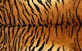 Tiger Pattern Awesome Skin Feather Tiger Wallpaper 48 Wallpaper Freewallpic