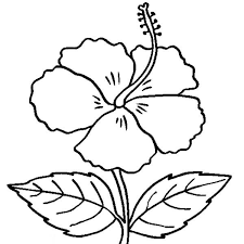 Small Picture Coloring Pages Of Hibiscus Flowers Coloring Pages