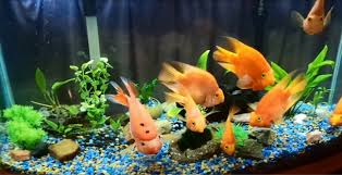 Image result for decorations to your aquarium