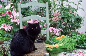 Why Lily Plants Are Poisonous to Cats