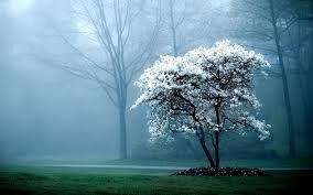 trees fog hd desktop backgrounds description funmozar amazing photos of nature