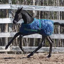 Shedrow Adjustable Foal Blanket 400 Gm Bls1524 Greenhawk