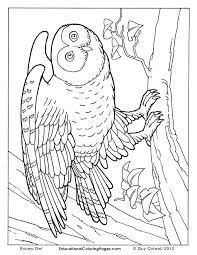 Realistic People Coloring Pages At Getdrawingscom Free For