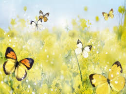 yellow erflies f2