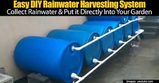 rainwater harvesting system using multiple plastic barrels
