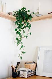 Climbing Plants Indoor