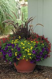 Small Picture Container Garden Design Structure Proven Winners