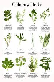Kitchen Herbs Garden 1000 Ideas About Kitchen Herb Gardens On Pinterest Herb Garden