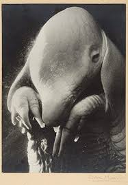 best surrealism images surrealism architects  photography and surrealism essay heilbrunn timeline of art history the metropolitan museum of