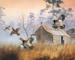 Image result for covey of quail