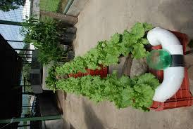 Hydroponics Herb Garden Kitchen Indoor Hydroponic Gardening Self Watering Indoor Hydroponic
