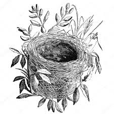 鳥の巣のヴィンテージのイラスト ストック写真 Sirylok 9020235
