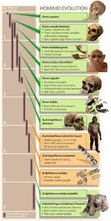 Anthropology Chart Hominid Evolution Chart Anthropology Science