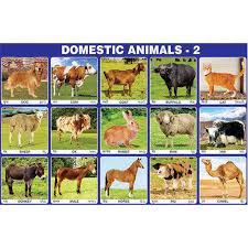Pet Animal Picture Chart Domestic Animal Chart