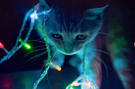 Animals In Christmas Lights 2880x900px Free Download Hd Wallpaper Animals Anime