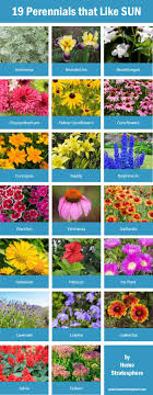 Small Picture Best 20 Full sun plants ideas on Pinterest Full sun landscaping