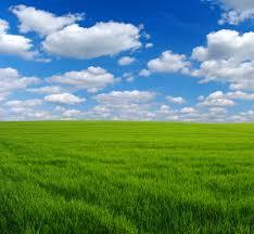 Green Grass Field Field Green Grass G Nongzico