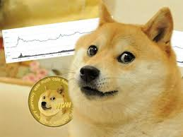 Paxful makes the process of purchasing btc with rocket pay with rocket remit to have bitcoin in your paxful wallet in less than an hour. What Is Dogecoin And Why Is Elon Musk Tweeting About It The Independent