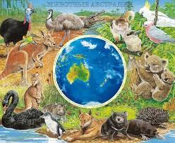 Животные Австралии Животный мир Животные Австралии 1