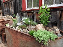 a galvanized water trough with alpine plants
